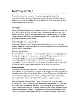Nervesystemet Notater Biologi 1