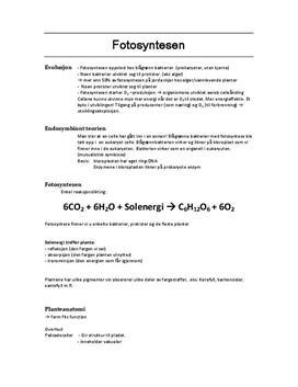 Fotosyntesen Kap. 4 Sammendrag Bios 2