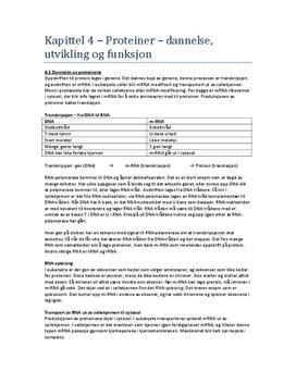 Proteiner – Dannelse, Utvikling og Funksjon, Kap 4 Sammendrag