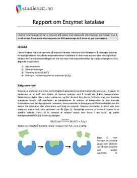 Enzymet katalase | Rapport i Kjemi 2
